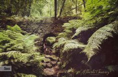 the enchanted wood by Alberto Suárez on 500px