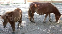 Video about Pony with cub at shade in paddock. Video of calm, livestock, mammal - 77397834 Livestock, Mammals, Cubs, Pony, Horses, Image, Pony Horse, Bear Cubs, Horse
