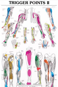 Shiatsu Massage Trigger Points II, yep we like trigger points so well at F. we have both posters to help educate our clients! Occupational Therapy, Physical Therapy, Trigger Point Therapy, Reflexology Massage, Trigger Points, Pressure Points, Anatomy And Physiology, Chronic Fatigue, Chronic Pain