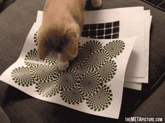 Cat discovers optical illusions. I am so doing this with Chance!