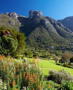 """Kirstenbosch National Botanical Garden (South Africa). """"An 89-acre spread in the eastern slopes of Cape Town's Table Mountain, Kirstenbosch is remarkable not only aesthetically but historically...even now, almost all the species therein are indigenous...Stay at the nearby Cape Grace..and avail yourself of the hotel's Build-a-Basket service: copious delicacies will be packed and dispatched..in a chauffeur-driven BMW to Kirstenbosch's protea enclave (or the section of your choosing)."""""""