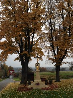 Loukovec křížek podzim