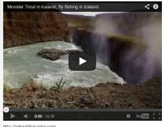 http://natoutdoor.ning.com/video/monster-trout-in-iceland-fly-fishing-in-iceland