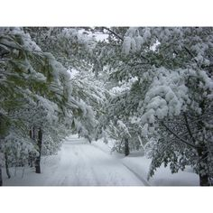 Winter Landscape ❤ liked on Polyvore featuring backgrounds, pictures, christmas, winter, photos, embellishment and detail