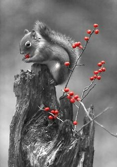 Hight and red by Andre Villeneuve ✿⊱╮