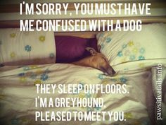 I'm sorry, you must have me confused with a dog...