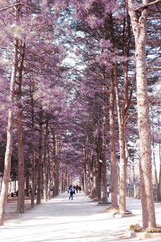 Nami Island, South Korea.. After dakgalbi.