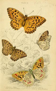 British butterflies / - Biodiversity Heritage Library