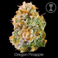 Our Oregon Pineapple transports you to Hawai'i. Mixing sweet and sour, the sativa-dominant hybrid is perfect for those with tasks or outdoor explorers. Buy Cannabis Online, Buy Weed Online, Hash Oil, Cbd Oil For Sale, Seeds For Sale, Marijuana Plants, Cannabis Oil, Medical Marijuana, Herbs