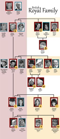 British royal family tree with numbers to show the order of family members in line to the crown. ...Princess Anne and family do not even get considered until after her younger brothers and their heirs (including grandchildren!)...
