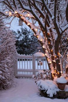 Snow and white lights... lovely like moonlight on the snow