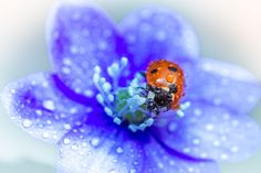 Exploring the Mini World 4 by Lauri Lohi on 500px