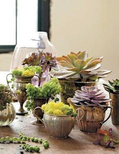 succulent retail display  using plants in old silver urns, sugar and creamers too!