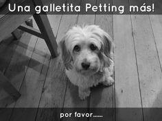 """""""Una Galletita Petting más!"""" - Proba las ricas Galletitas Petting. Sabor que Alimenta !!!"""