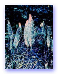Oldrobel's Fotoreise: Blue Grass