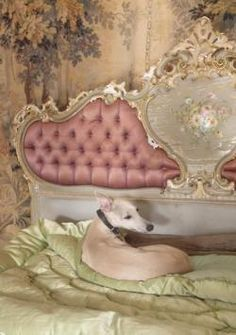 Beautiful antique sofa from Fleaing France ~ this pooch has got it made ;)