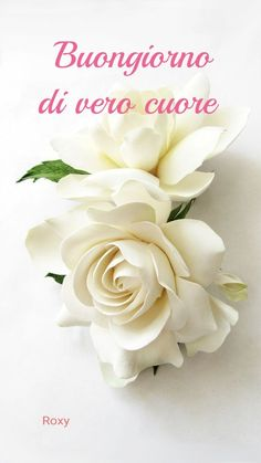 Rose, Anna, Pictures, Bonjour, Humor, Pink, Roses