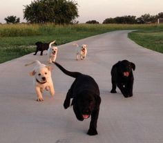Funny #Labs