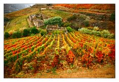 Port is a produced exclusively in the Douro Valley in the northern provinces of Portugal.
