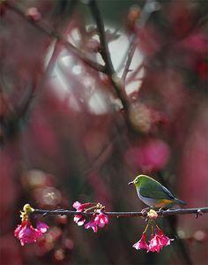 #912 小綠芒櫺 | Dear Flickr friends, you are very welcome to hea… | Flickr