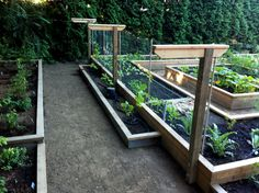 raised beds on different levels and building a grape trellis from pallet wood