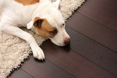 View photos of more cute pets and floors!