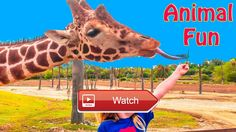 😸 ASSISSTANT Wild Animal Safari Adventure Feeding Giraffes Animals Video 🐶 We love Nickelodeon Paw Patrol with PJ Masks and Lion Guard…