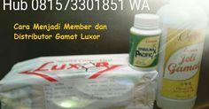 Cara menjadi member, agen dan distributor jeli gamat luxor