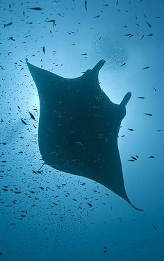 Google Image Result for http://www.letsgodigital.org/html/review/underwaterphotography/olympuse330/maldives/scubadiving_zoom11.jpg