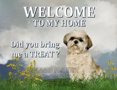 Shih Tzu Printable Dog Welcome Art Sign Print JPEG Instant Digital Download You Print Decor for Home or Office or Gift Giving on Etsy, $4.80