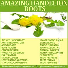 ☛ Do YOU use Dandelion Root?  It is packed with health benefits and can aid with weight loss, lower your High Blood Pressure and so much more....  FOR ALL YOU NEED TO KNOW ABOUT DANDELION ROOT:  http://www.stepintomygreenworld.com/greenliving/greenfoods/healing-properties-of-dandelion-leaves/  ✒ Share | Like | Re-pin |