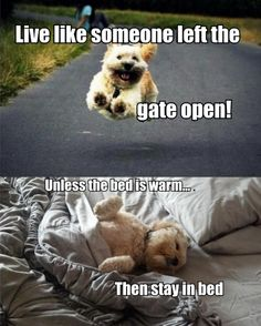 Dog philosophy...  Live like someone left the gate open UNLESS the bed is warm... Then stay in bed.  <3