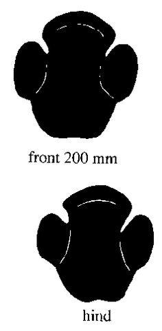 ... Animal Tracks on Pinterest | Octopus Images, Rhinos and Footprint