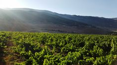 Another magical sunrise above Domaine des Tourelles' vineyards in the Bekaa Valley.