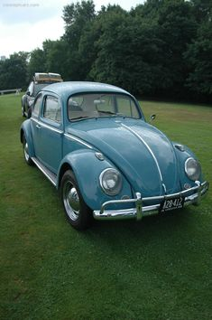 Volkswagen Beetle Vintage, Beetle Car, Car Volkswagen, Volkswagen Vehicles, Pretty Cars, Cute Cars, My Dream Car, Dream Cars, Bug Car