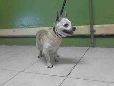 www.PetHarbor.com pet:LACO1.A4978126