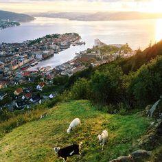 View of Bergen, Norway 🐐