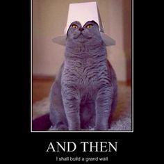 Haha asain kitty