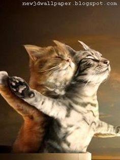 Funny  Cute Cats