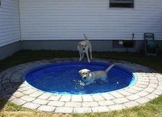 I was just talking about putting in an in-ground doggy pool!