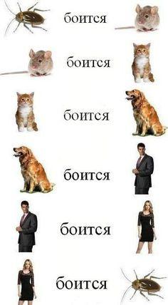 Фото приколы: http://hooper-dooper.ru/photo/smeshnye_prikolnye_foto/28/