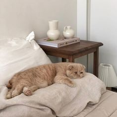 kinda just wanna write a book cats pets cute Cat Aesthetic, Beige Aesthetic, Japanese Aesthetic, Animals And Pets, Baby Animals, Cute Animals, Baby Cats, Cats And Kittens, Kitty Cats