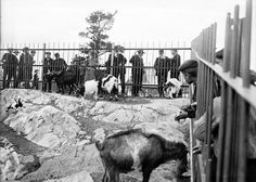Helsinki Zoo ca 1900 | Flickr - Photo Sharing!
