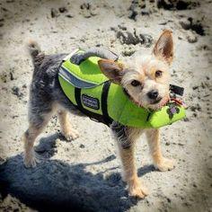 Hercules is a contestant for True Chews Dog of the Week! #TrueChews