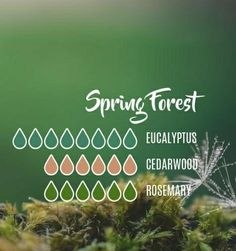 aroma diffuser egypt aromatherapy oils bath and body works Essential Oil Diffuser Blends, Doterra Essential Oils, Yl Oils, Young Living Oils, Young Living Essential Oils, Spring Forest, Diffuser Recipes, Essentials, Craft Fairs