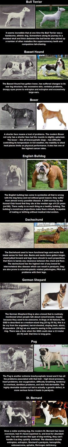 100 years of selective breeding - I really like how these dogs used to look before people went mental with the pedigree.