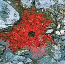 feuilles rouges land art