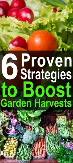 6 Proven Strategies to Boost Garden Harvests. Watch this video to learn tips and ideas for to increase your garden vegetable harvest. #Homesteadsurvivalsite #Garden #harvest #Vegtableharvest