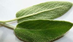 Regain hair and teeth natural color with sage - Healthy Lifestyle Home Remedies For Snoring, Natural Home Remedies, Herbal Remedies, Hair Remedies, Menopause, Sage Health Benefits, Regain Hair, Sage Herb, Clary Sage Essential Oil