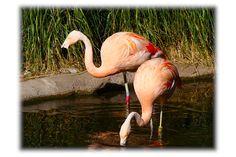 Woodland park Zoo Seattle Woodland Park Zoo, Animals, Animales, Animaux, Animal, Animais